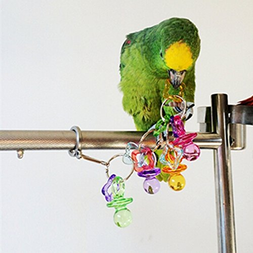 ColorNameful Acrylique Animaux Oiseau Parrot Bites Peck Cage Cockatiel Budgie Jouer Jouets de Buckdirect Worldwide Ltd.