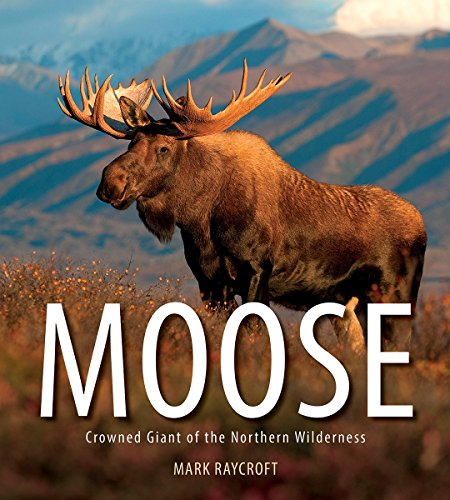 Moose: Crowned Giant of the Northern Wilderness de Firefly Books Ltd