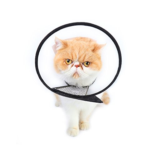 Morfone restauration Colliers Elizabeth Cercle Pet Collier protection Cercle pour chiens et chats Toilettage Headgear Coque restauration Colliers. de Morfone