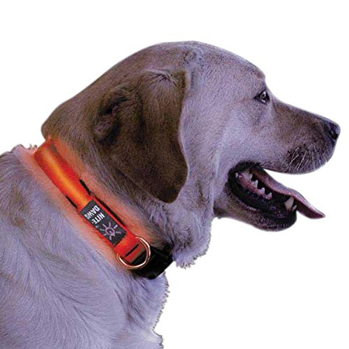 Nite Ize Nite Dawg Collier pour chien avec diode lumineuse LED Rouge Taille S de Nite Ize