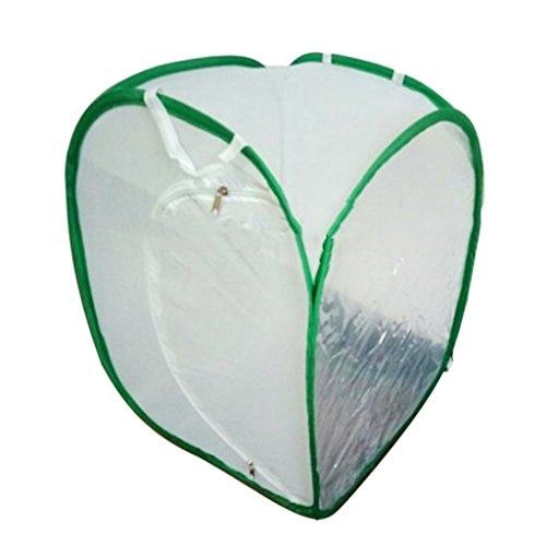 SGerste 2 couleurs Praying Mantis bâton insectes Papillon cylindrique pop-up Cage en maille filet – Blanc, 40 x 40 x 60 cm de SGerste