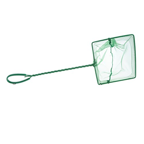 Sharplace Epuisette Aquarium en Plastique/Fil Vert - 6 Pouces de Sharplace