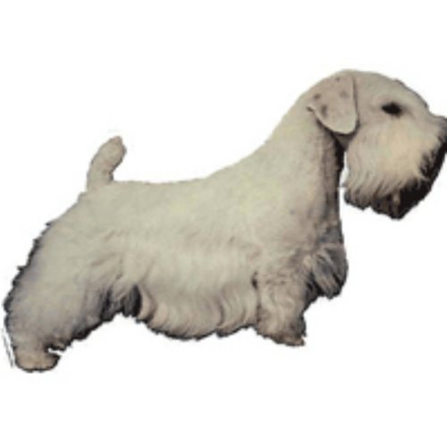 World Stickers Sweden AB Autocollant Sealyham Terrier de World Stickers Sweden AB